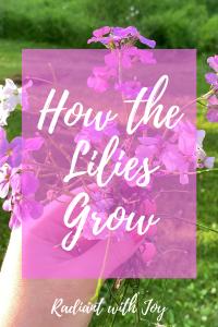 How the Lilies Grow